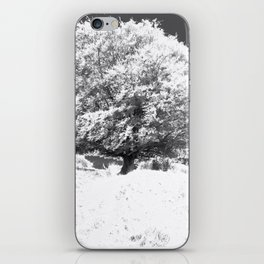 Snow Tree iPhone Skin