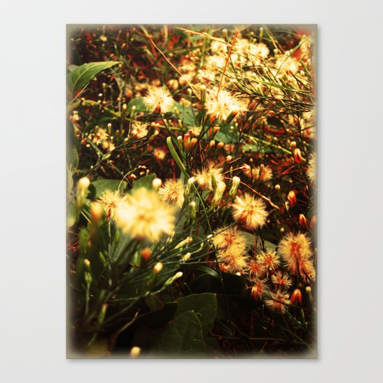 everything/dandelions Canvas Print