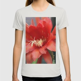 Jungle Cactus Red T-shirt