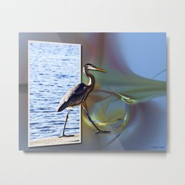 Blue Heron Strutting Out Of Frame Metal Print