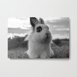 A funny Rabbit Metal Print