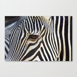 Zebra Soul Portrait Closeup Canvas Print