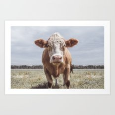 Cow Portrait Photography | Farm animal Art Print