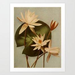 Vintage Water Lily Art Print