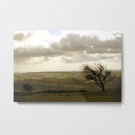 Wind Swept Tree Metal Print