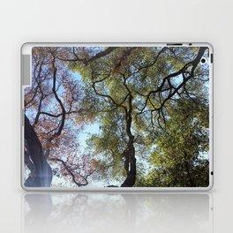 Dos Picos Ramona Oak Tree Laptop & iPad Skin