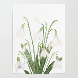 white snowdrop flower watercolor Poster