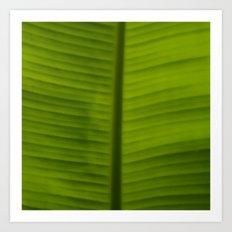 A Green Leaf Art Print