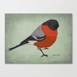 The Bullfinch Canvas Print