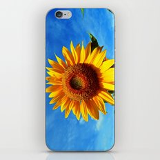 Stunning Sunflower iPhone & iPod Skin