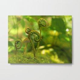 Mushroom In The Ferns... Metal Print