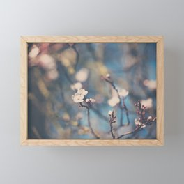 white apple blossom flowers on a beautiful spring day! Framed Mini Art Print