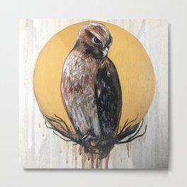 Hawk Vision Metal Print