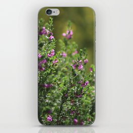 Closeup of Texas Ranger Bush Against Yellow Palo Verde Blossoms iPhone Skin