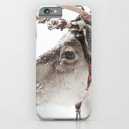 Reindeer with antlers in snow iPhone Case