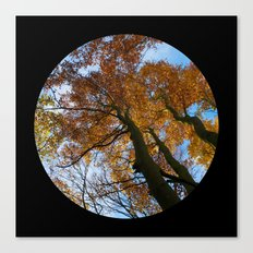 Tree from below Canvas Print