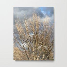 Tree in storm Metal Print