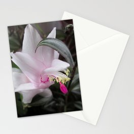 Pink Christmas Cactus Bloom Stationery Cards