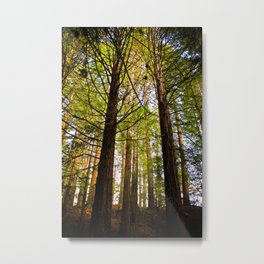 Within The Redwoods Metal Print