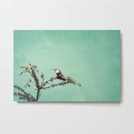 Hummingbird at rest Metal Print