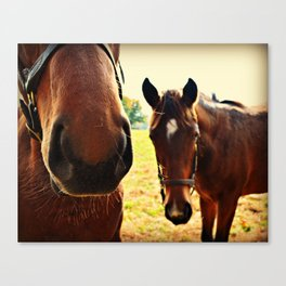 Kentucky Horses Canvas Print