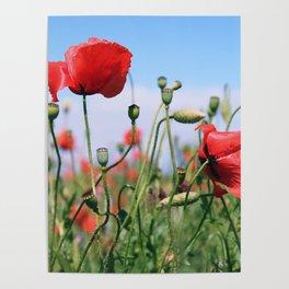 poppy flower no13 Poster