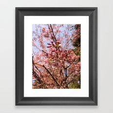 Spring comes suddenly Framed Art Print
