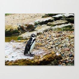Penguin stare Canvas Print