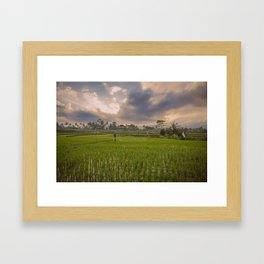 Bali rice field Framed Art Print