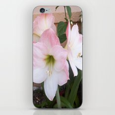My Aunt's Flowers 1  iPhone & iPod Skin