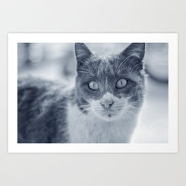 Cold Cat Art Print
