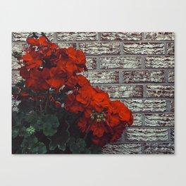 Red bricks red flowers Canvas Print