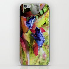 Blue Poison Dart Frogs (Dendrobates Azureus) iPhone & iPod Skin