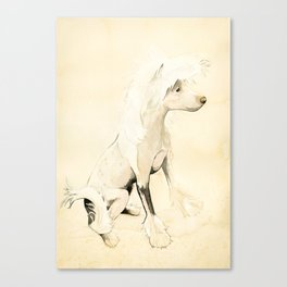Lucy - Chinese Crested Canvas Print