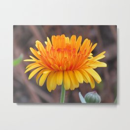 unique yellow flower, bloom, nature Metal Print