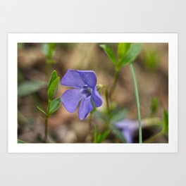 small blue flower in the forest Art Print