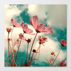 cosmos flowers II Canvas Print