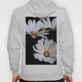 White African Daisies Isolated on Black Hoody