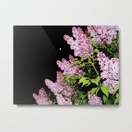Lilacs at Night Metal Print