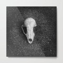 Tree rat skull Metal Print