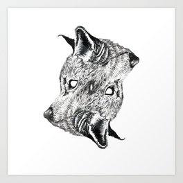 Canis latrans Art Print