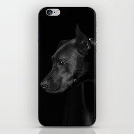 The black dog 7 iPhone Skin