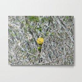 Life amid thorns Metal Print