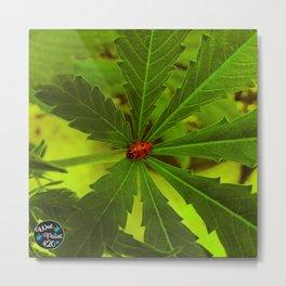 Lone Ladybug in the Cannabis Garden Metal Print