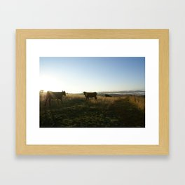 Early morning cows Framed Art Print