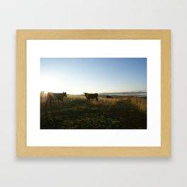 Early morning cows Framed Art Print