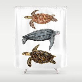 Green, leatherback and hawksbill sea turtles Shower Curtain