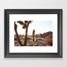 Joshua Tree, CA  / Dec 2013 Framed Art Print