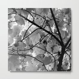 Canopy Metal Print