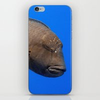 napoleon iPhone & iPod Skins featuring Napoleon Wrasse by Serenity Photography
